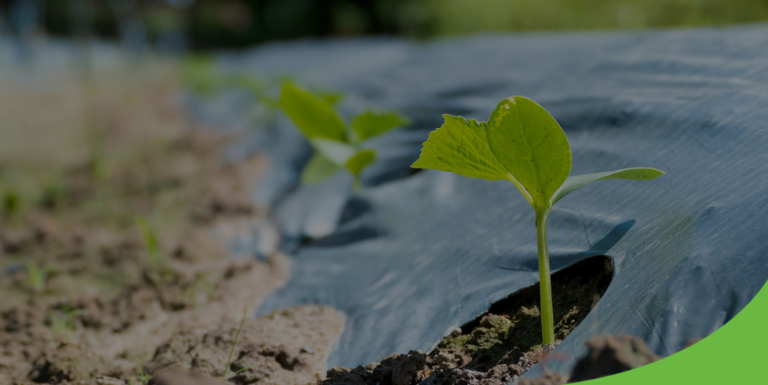 Is Agricultural Mulch Film Advantageous For The Fertility Of Soil?